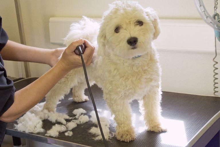 Grooming My Dog Myself