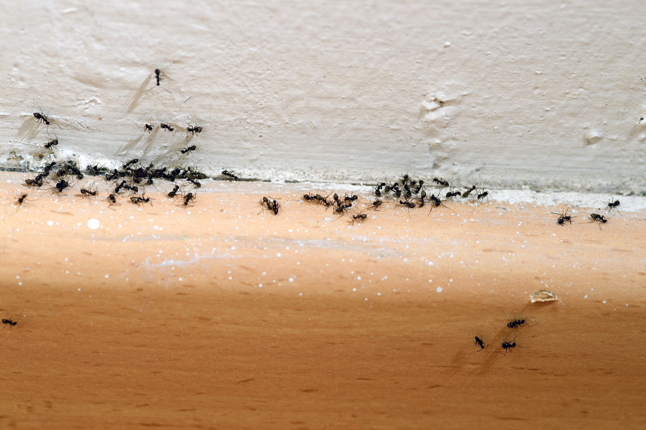 getting rid of ants is easy if you take the right steps