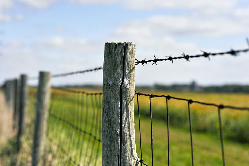 Old style, rustic wood post barb wire fence protecting corn field in the midwest United States