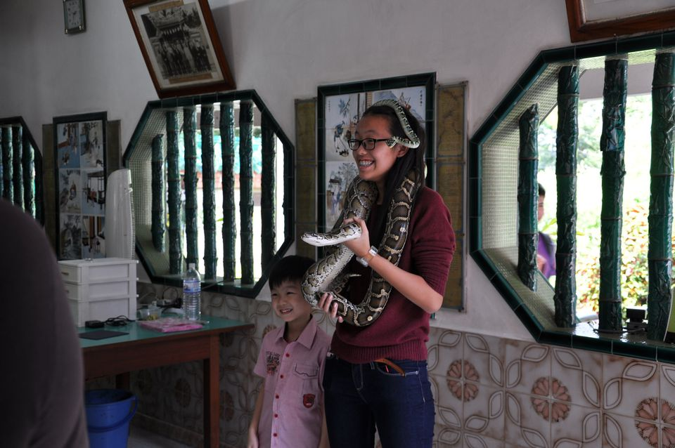 Photo op with snakes at the Snake Temple in Penang, Malaysia