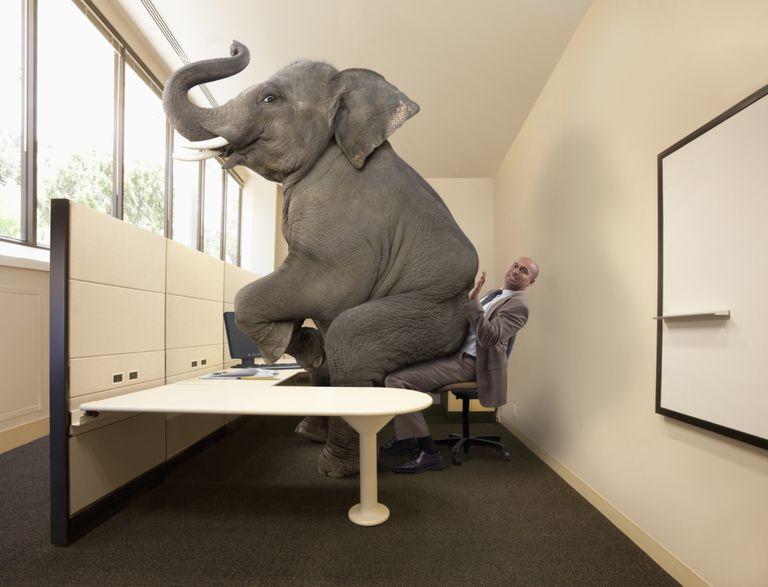 Elefante sentado encima de una persona en una oficina
