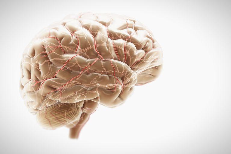 Illustration of a brain