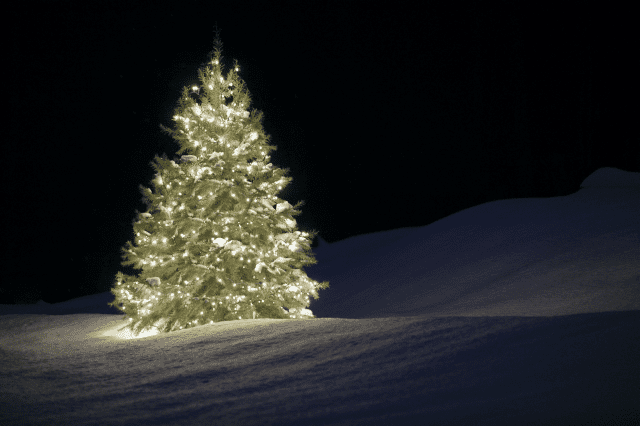 Silent night tree