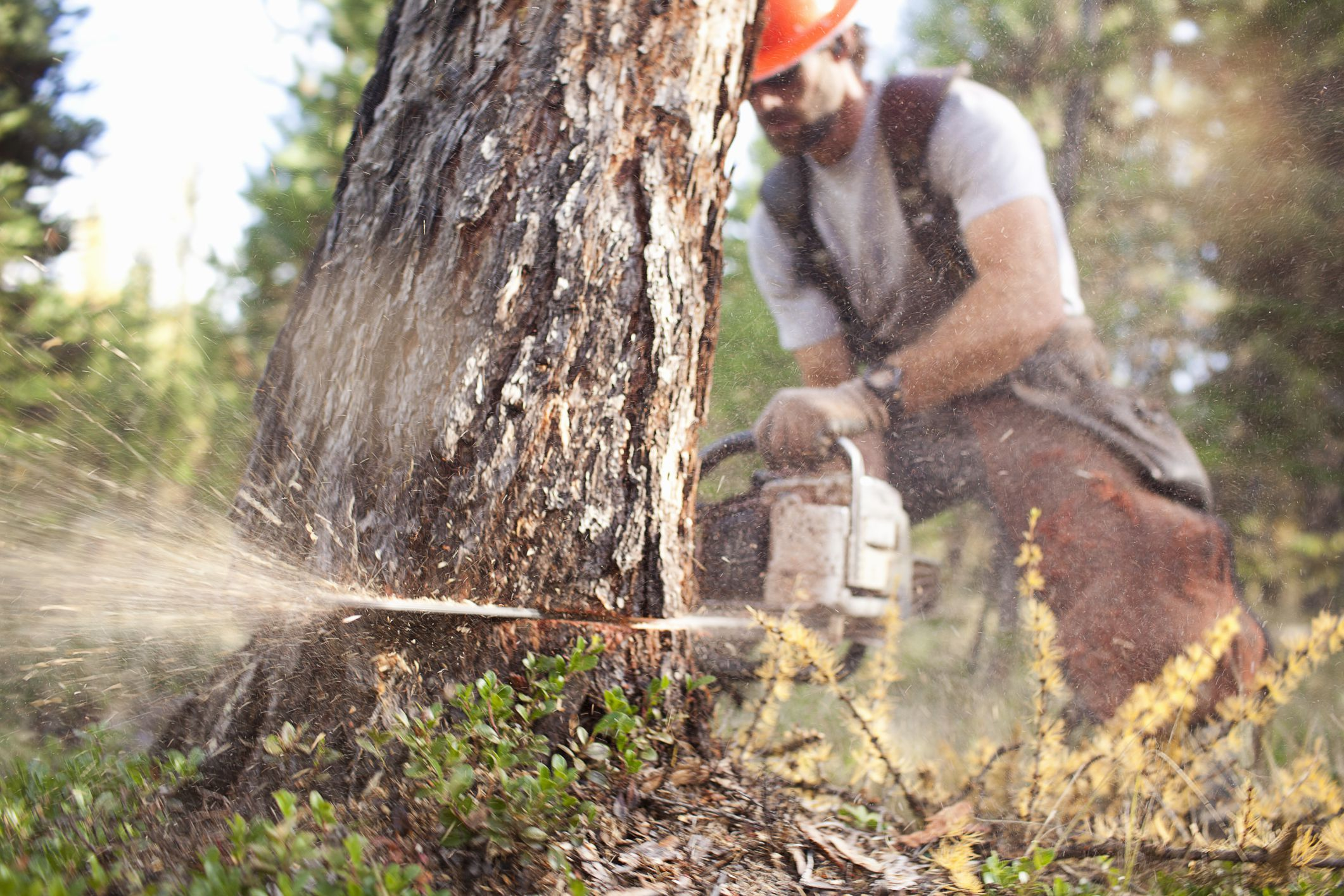 Tractor Man On Cutting Trees : Stihl chainsaw engine fuel mix ratio