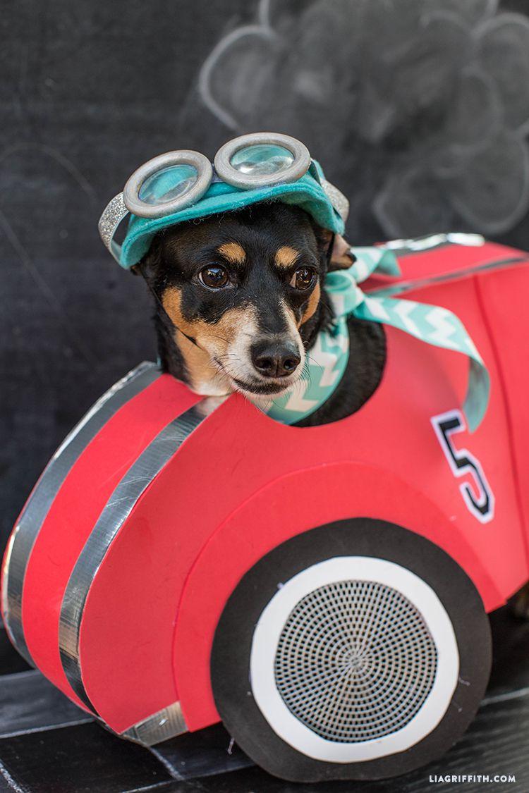 DIY Race Car Driver Dog Costume