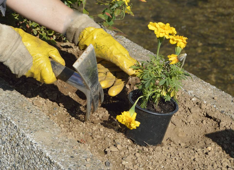 Planting in Clay Soil
