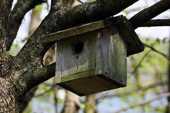 Simple Bird Houses Are Simply Great For Birds