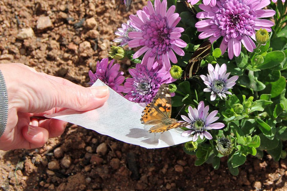 Butterfly Release at Desert Botanical Garden in Phoenix