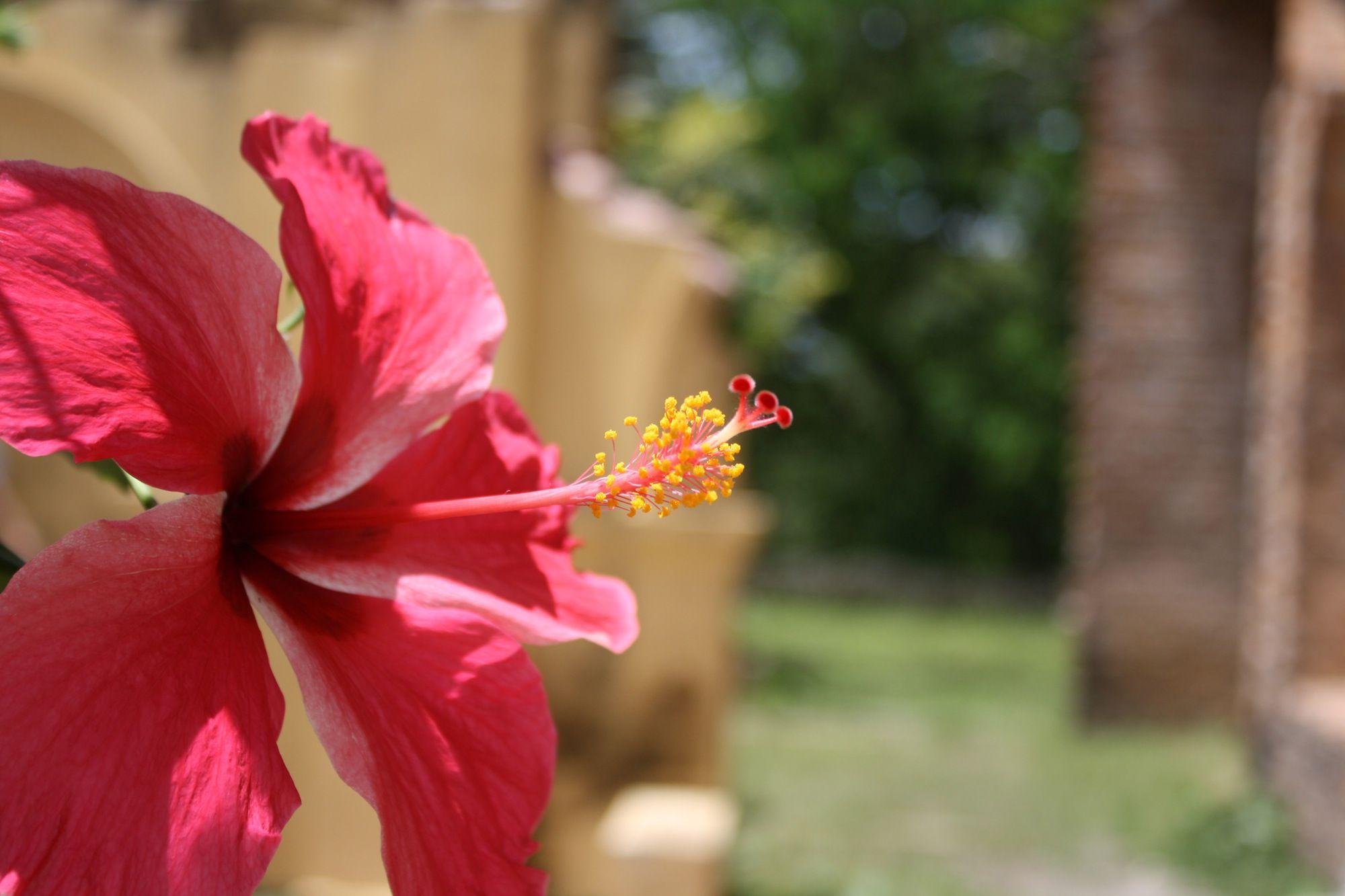 the 12 best flowering houseplants
