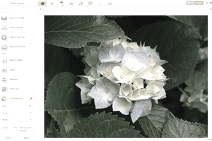 Screenshot of a flower being edited in iPiccy