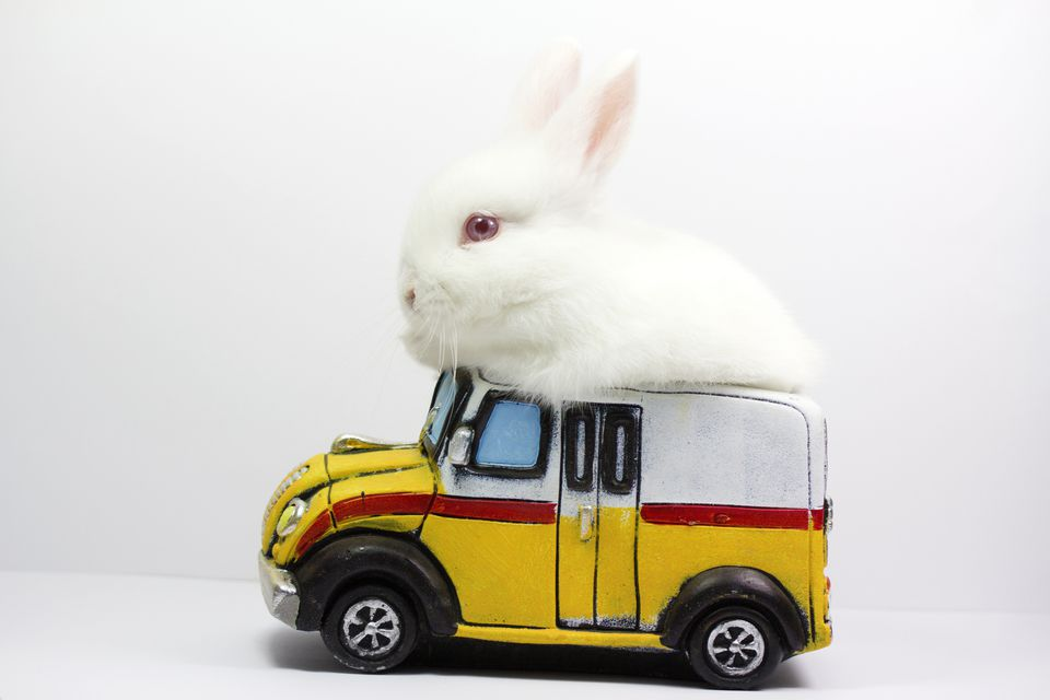 A rabbit in a toy car
