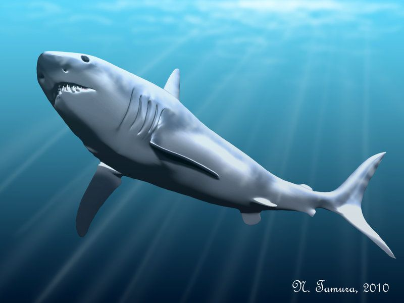 Biggest Shark Megalodon