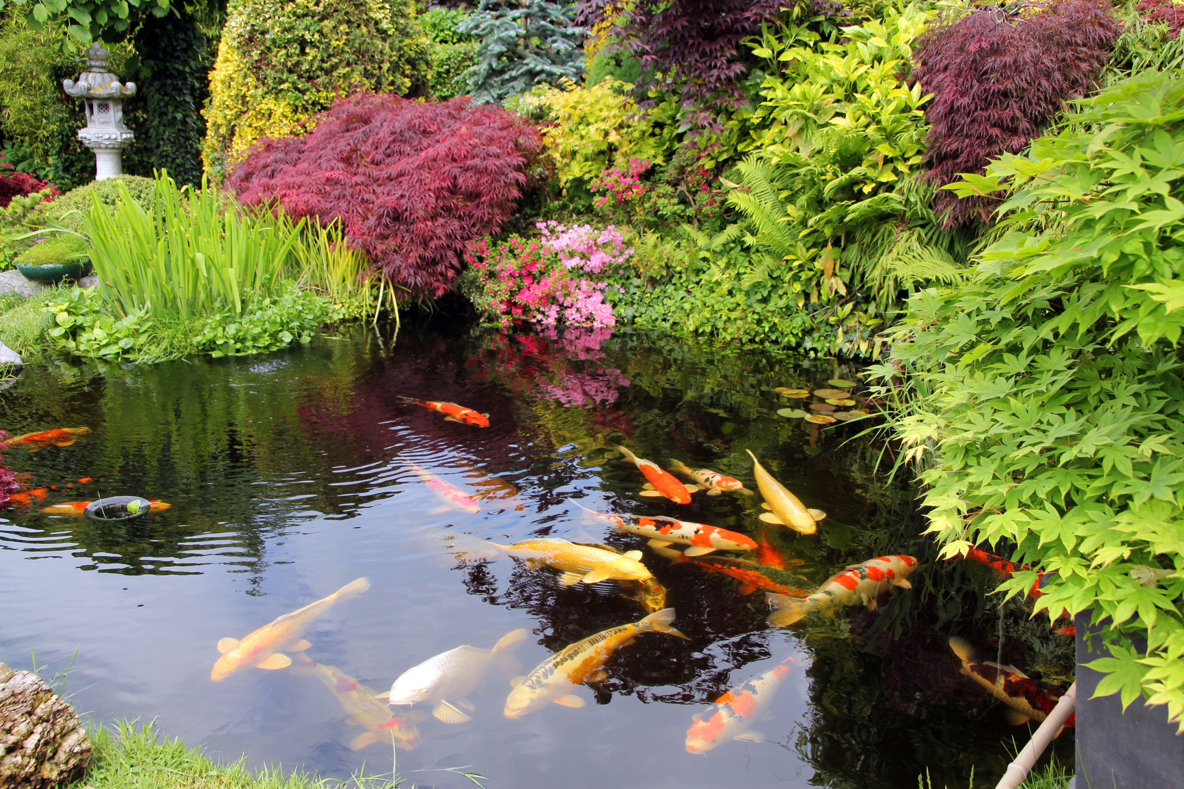 Landscaping withi water features for Koi water garden