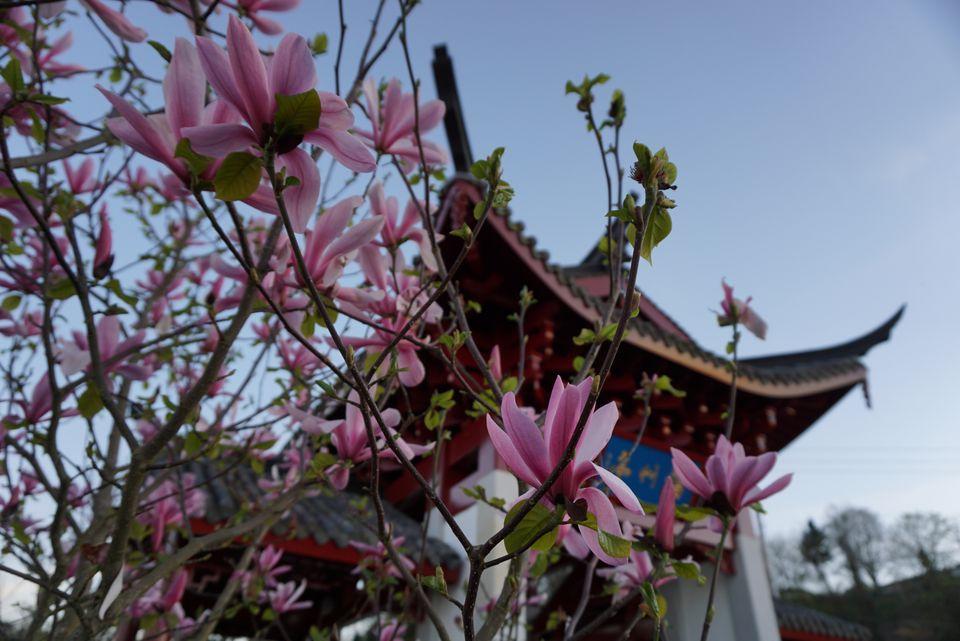 Chinese Reconcilation Park Tacoma