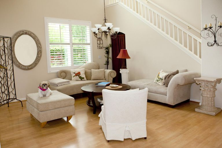 Interior of a home living room and shih tzu dog