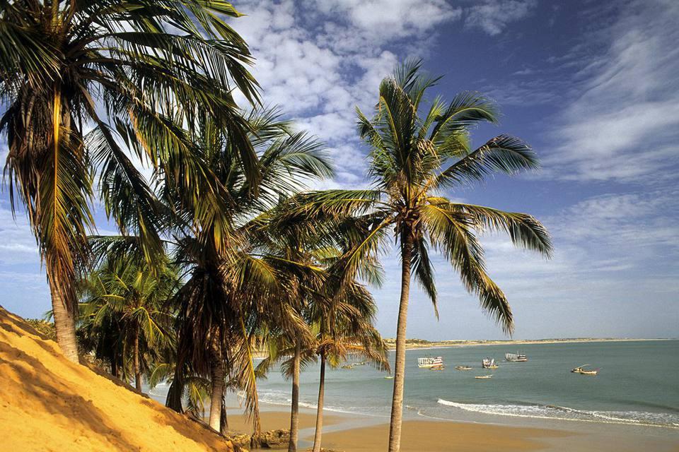 Brazil, Ceara State, palm trees on beach