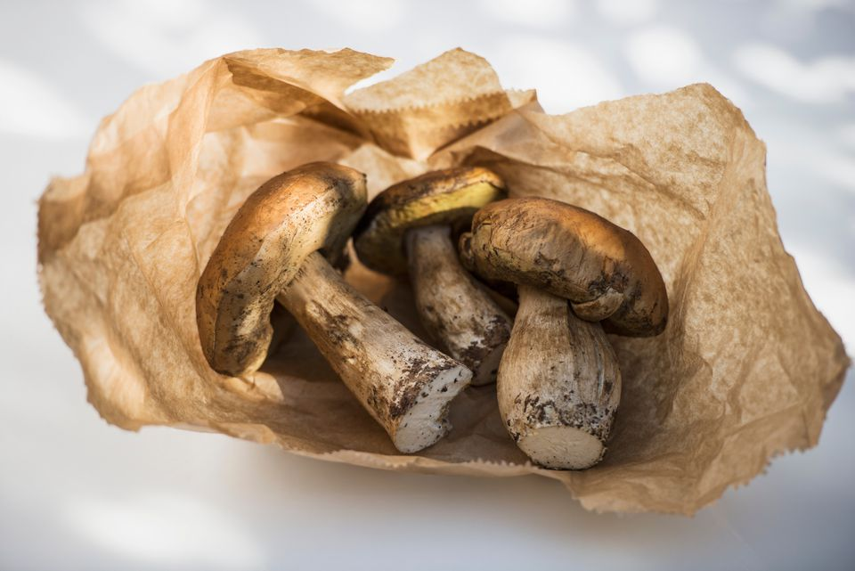 Fresh porcini mushrooms