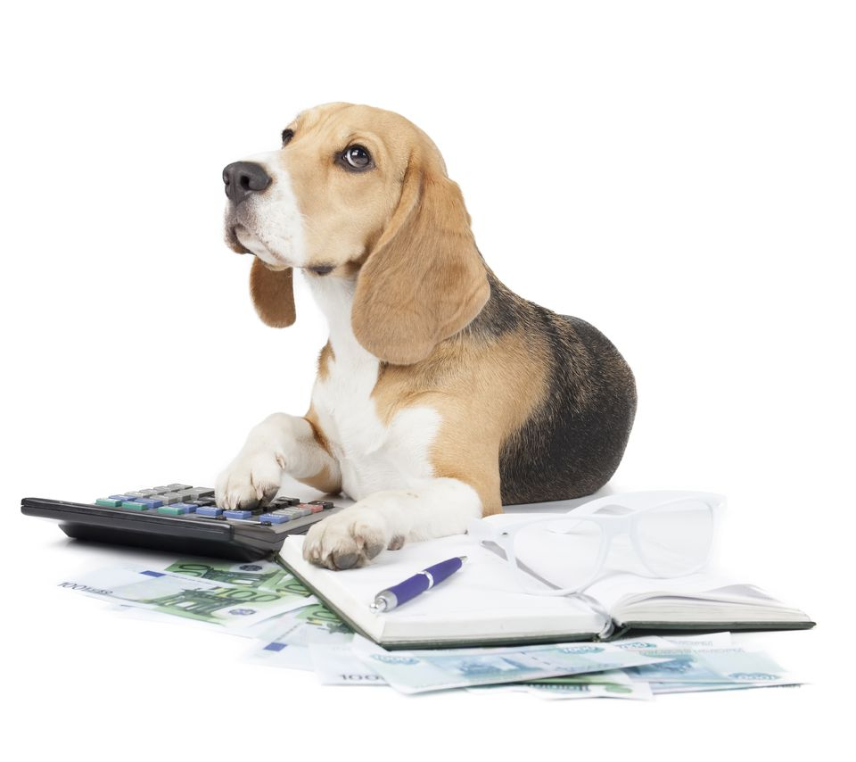beagle-paperwork-calculator-istock-Vivienstock.jpg