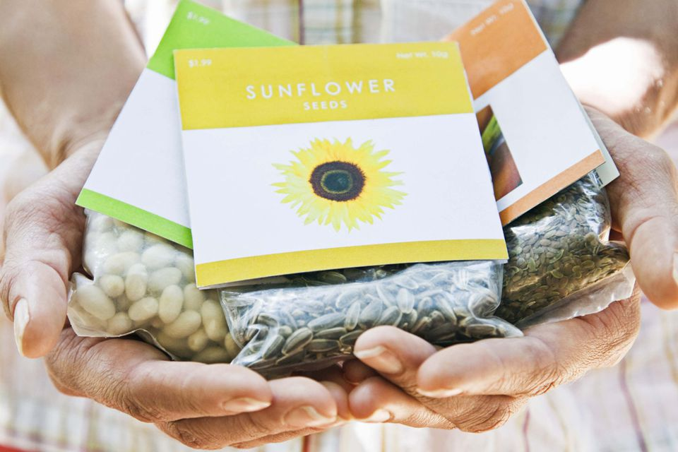 Person holding garden seed packets