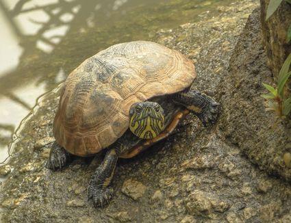 Y Wont My Turtle Eat Help Your Leopard Geck...