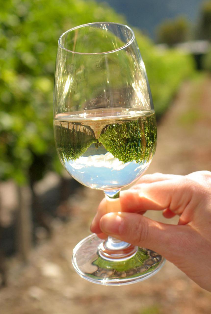 Glass of Sauvignon Blanc in Marlborough, New Zealand