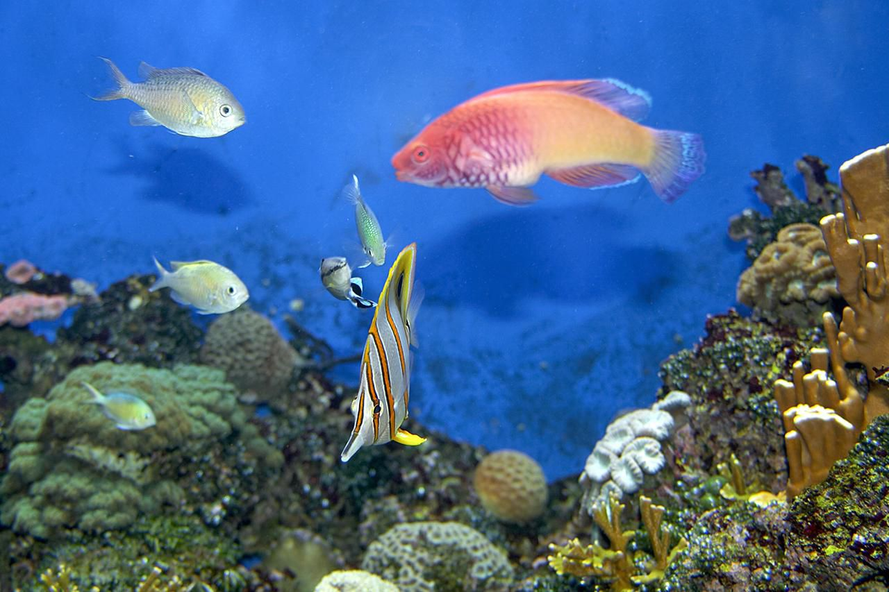 Top 10 Saltwater Aquarium Myths