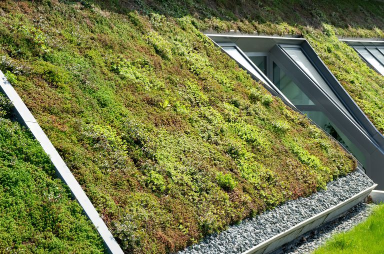 Detail of a green roof on a slant