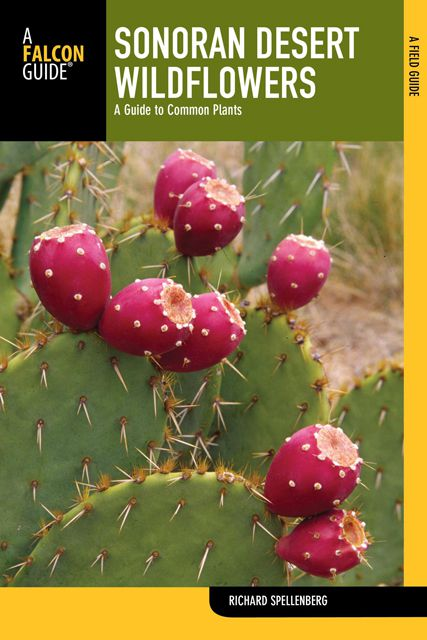 Sonoran Desert Wildflowers