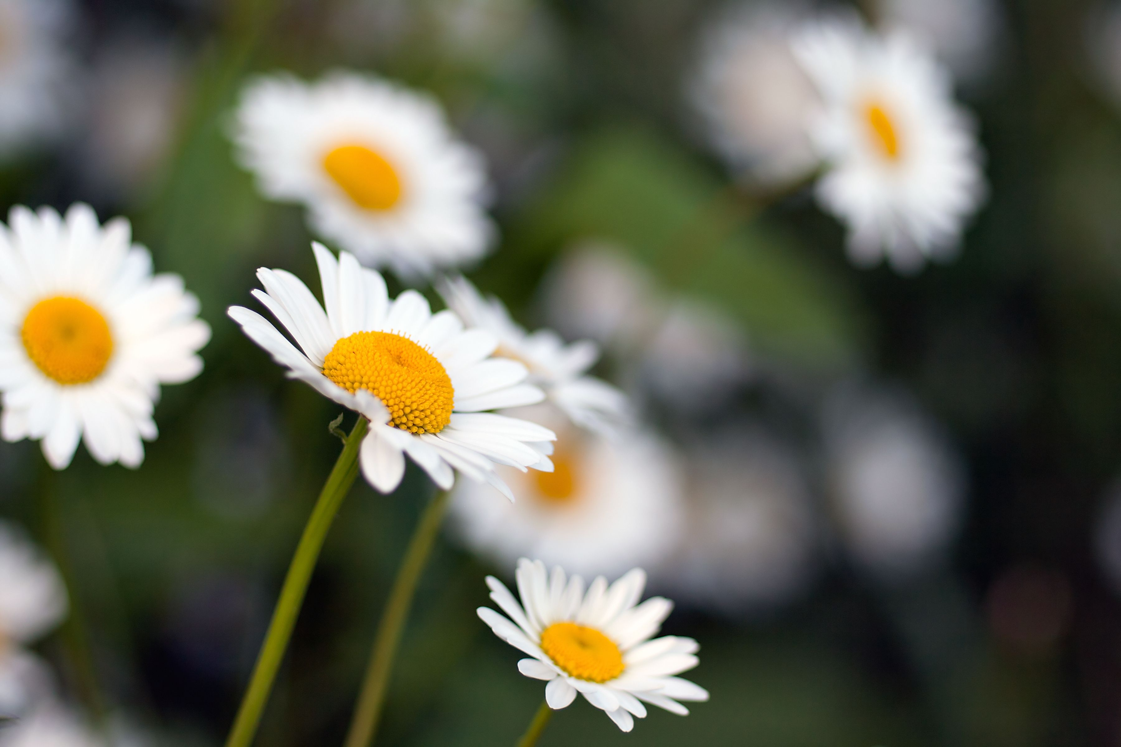 Photo guide to identifying types of wildflowers dhlflorist Images