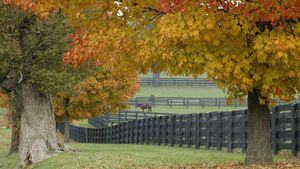 Horses in a field of fall trees.