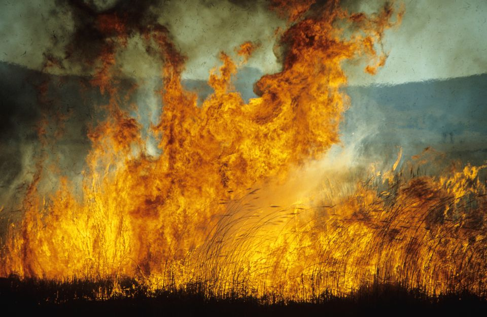 Huge flames leaping from a veld fire
