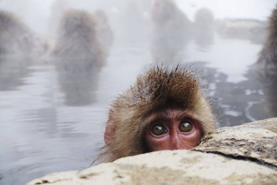 Portrait Of Monkey On Rock At Shore