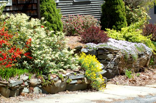 Photo of foundation planting displaying a wild jumble of spring color.