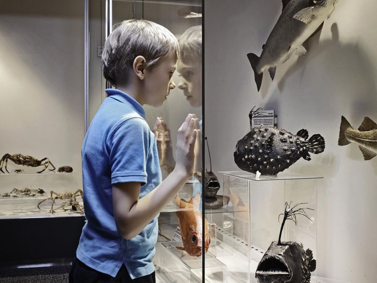 Boy admiring fish models behind glass.