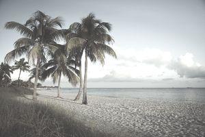 USA, Florida, Key West, palm trees on beach