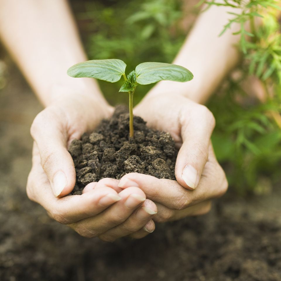 hands-plant-earth-sprout.jpg