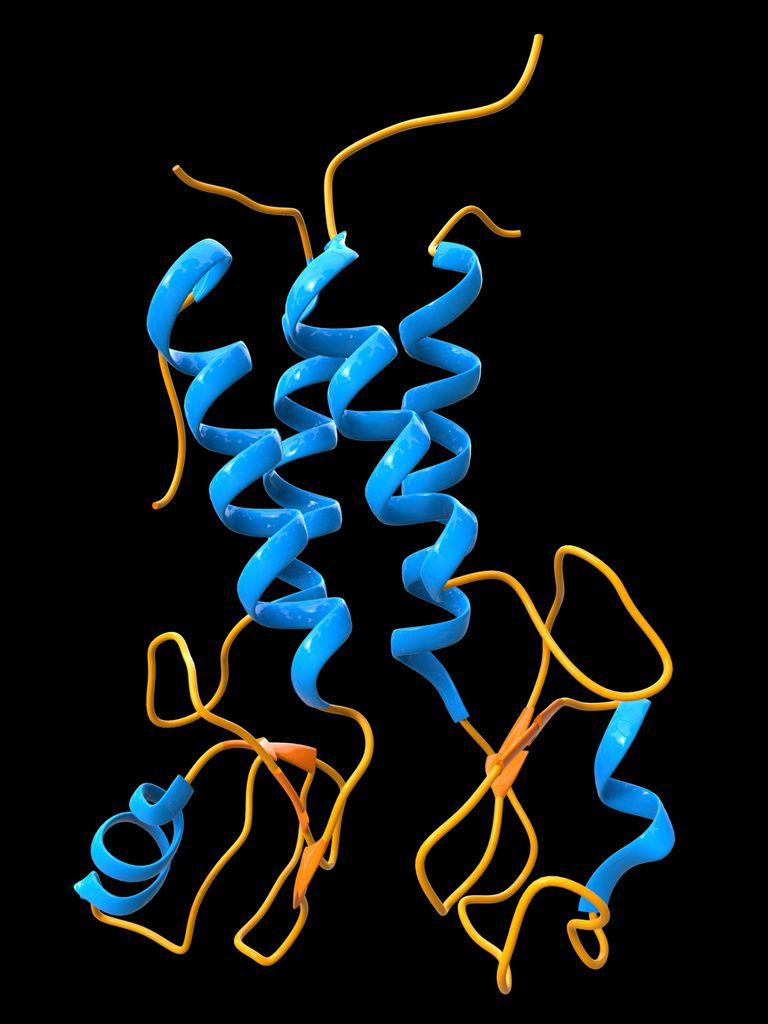 BRCA1 molecular model