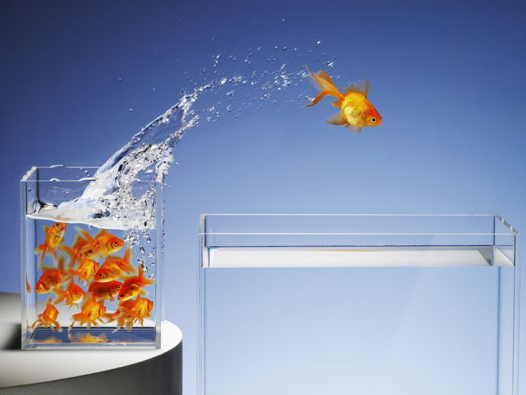 Can Your Business Idea Survive in the Goldfish Economy?