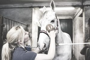 Woman grooming horse head