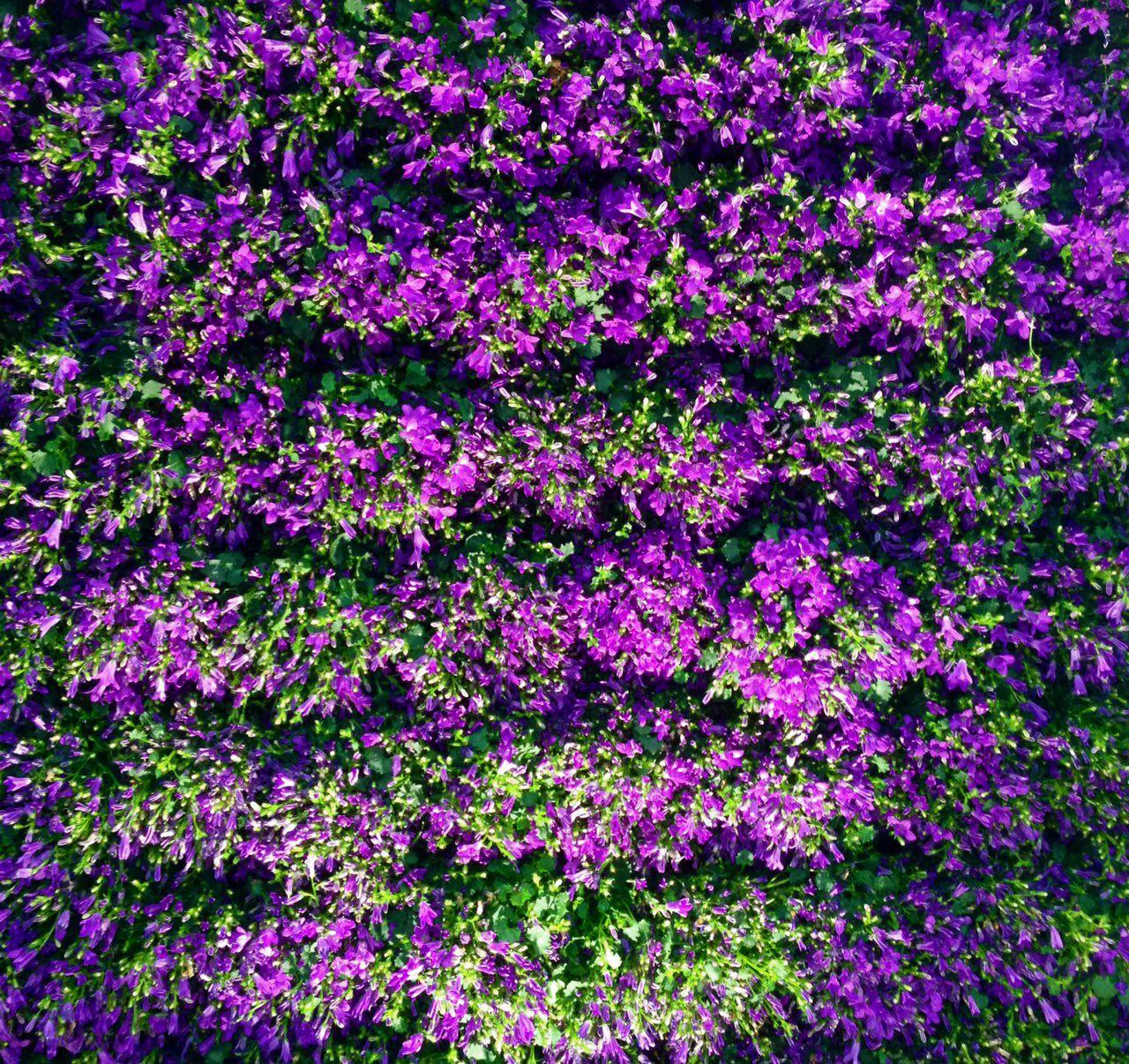Setos de color lavanda - Setos de jardin ...