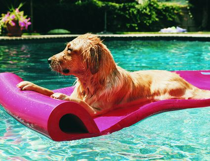 Keeping Pets Cool And Comfortable During The Summer