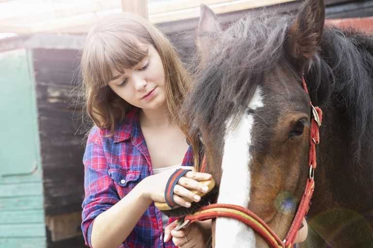 Teenager grooming horse, in front of barn.