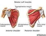 Rotator Cuff of the Shoulder