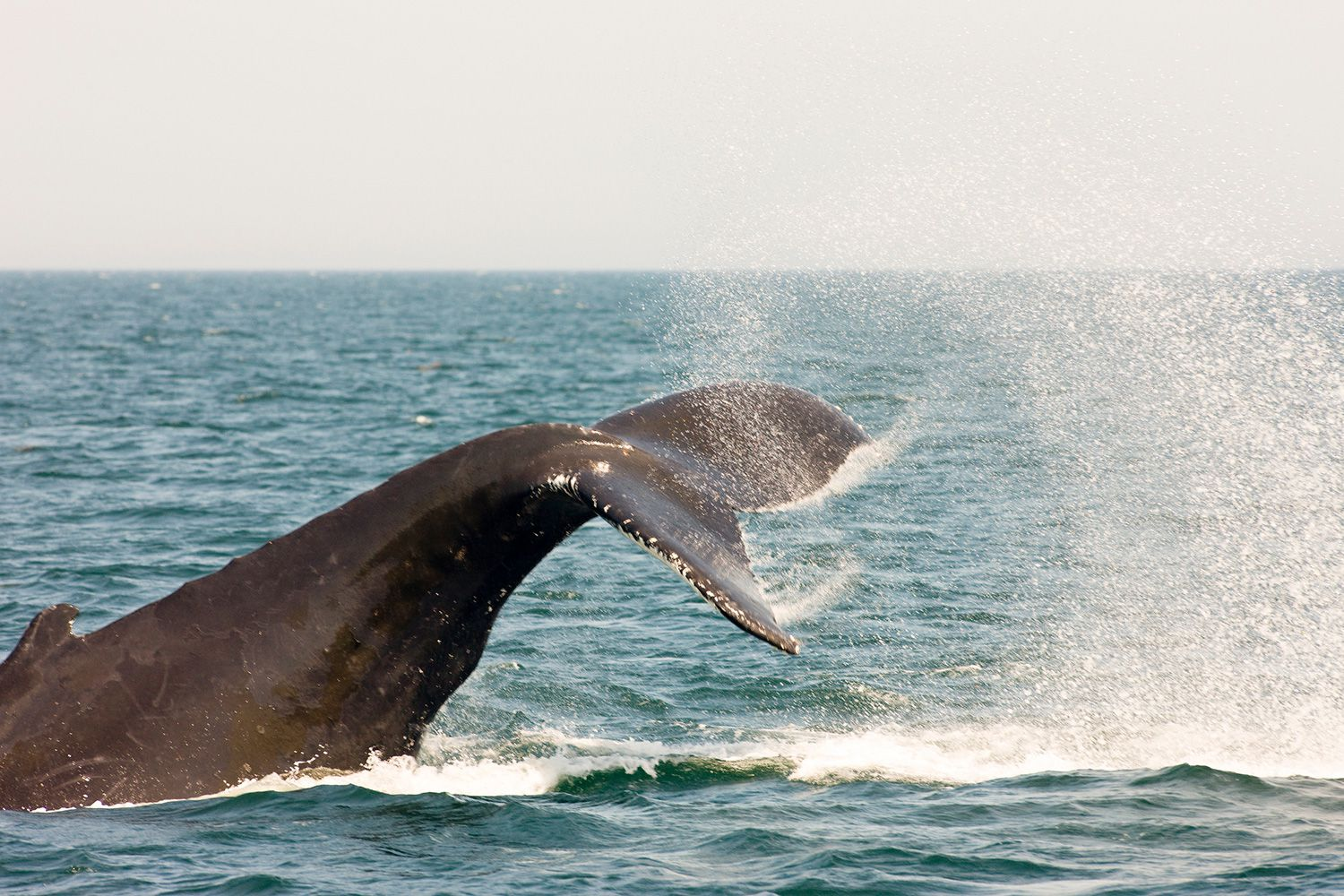 where to go whale watching in canada