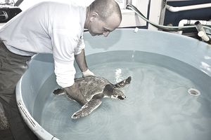 a man holding a turtle in a tank of water