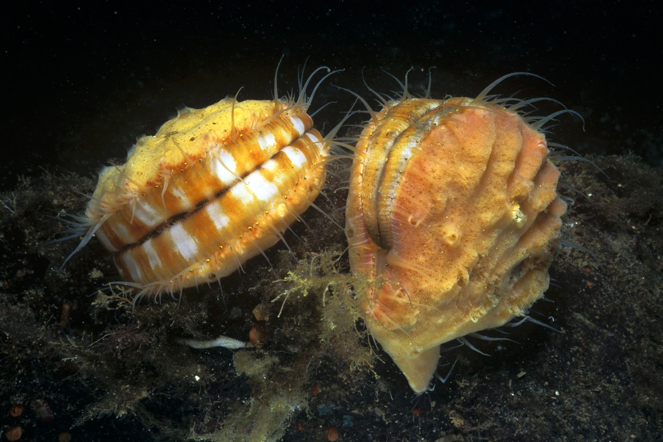 an analysis of mollusks in zoology Systematic zoology 28, 441-450), but this view is at this time out of fashion there  are  are sampled and/or to which kind of analysis is performed when this.