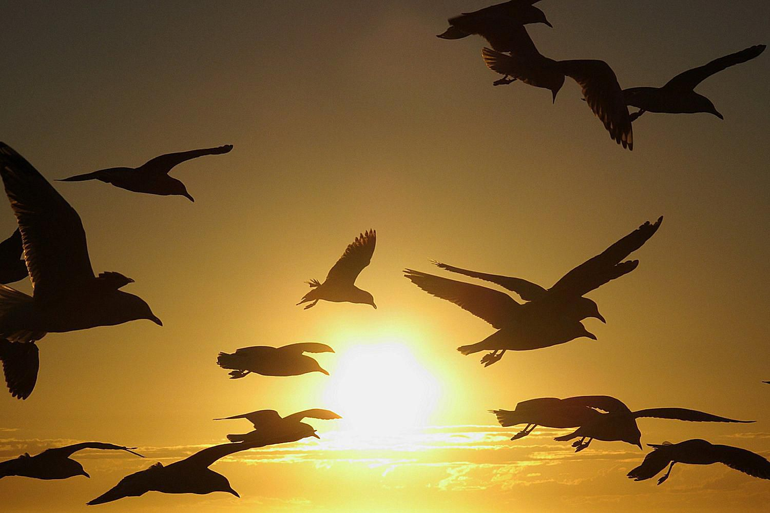 What does a flock of birds mean how birds navigate during migration buycottarizona