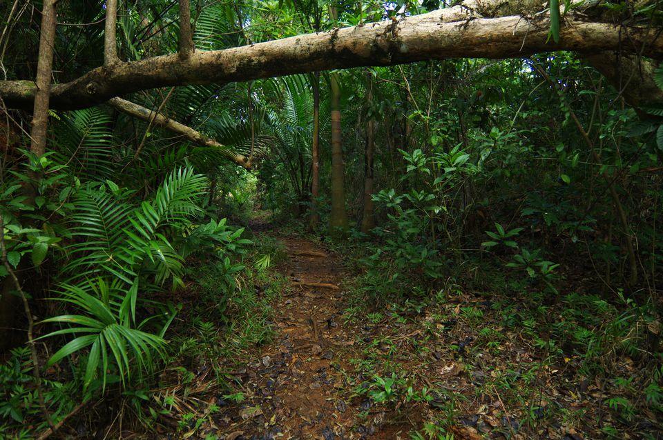 Jungle paths around Baracoa