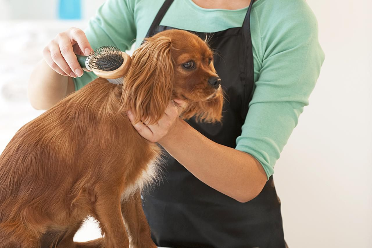 Visiting the dog groomer is about more than looking pretty |Dogs Grooming
