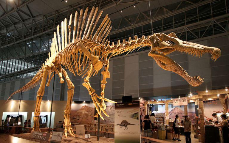 Texas Tech Natural History Museum